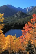 Stunning Fall with the Aspens
